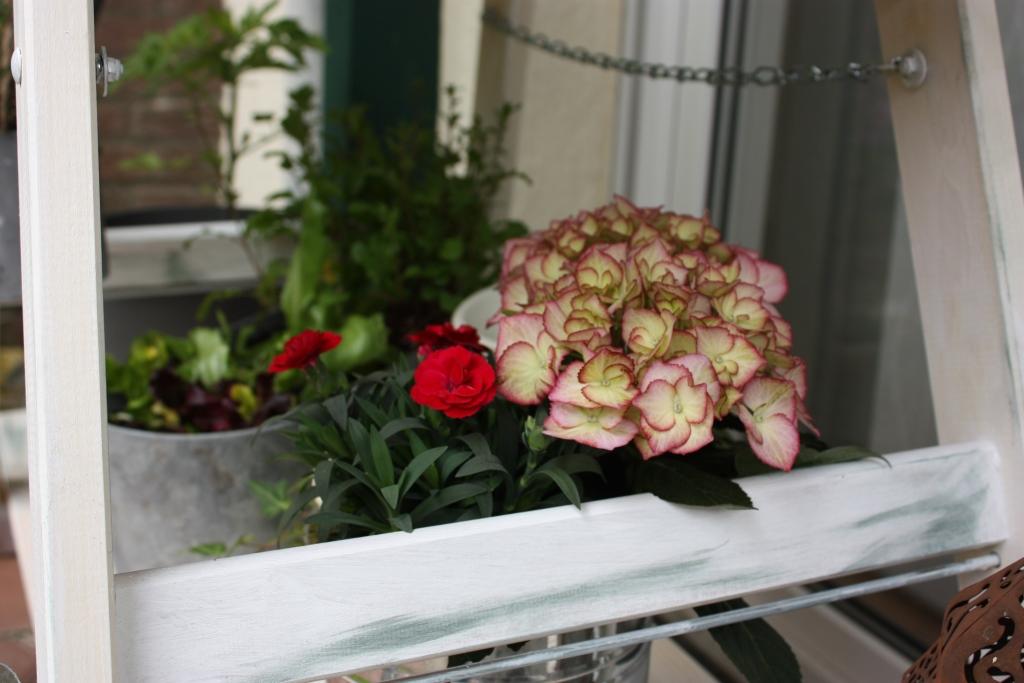 Leiterregal mit Blumendeko